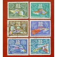 ГДР. Рыбы. ( 6 марок ) 1976 года. 6-16.