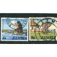 Замбия. Фауна