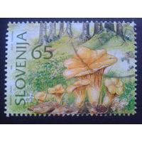 Словения 1996 грибы