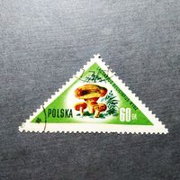 Марка Польша 1959 год Грибы