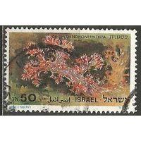 Израиль. Кораллы Красного моря. 1986г. Mi#1029.