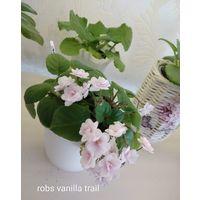 Фиалка трейлер robs vanilla trail