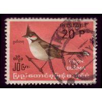 1 марка 1964 год Бирма Птичка 183