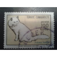 Турция 1973 кот