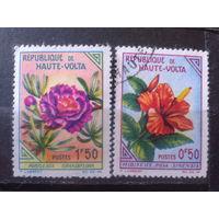 Верхняя Вольта 1963 Цветы