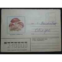 1982 маслята прошло почту