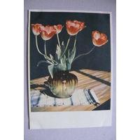 Белов И., Тюльпаны; 1965, чистая.