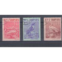 [125] Албания 1961.Фауна.Птицы.  Гашеная серия.