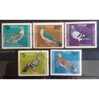 Болгария голуби-1984-5 марочек