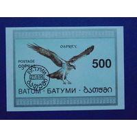Батуми 1994г. Птицы.