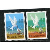 Исландия. Охраняемая природа. Птицы