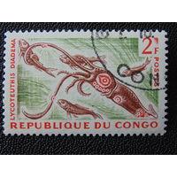 Конго. Фауна.
