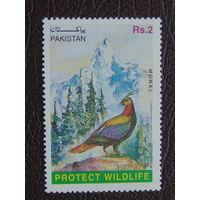 Пакистан.  Птицы