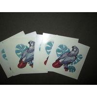 Переводные картинки попугаи