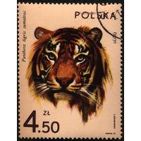 Кошки. Польша. 1972. Тигр. Марка из серии. Гаш.