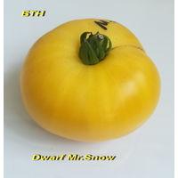 Семена томата Dwarf Mr.Snow.