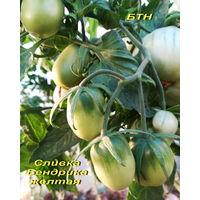 Семена томата Сливка Бендрика желтая