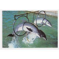 Календарик В дельфинарии 1993