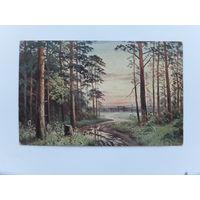 Открытка лесной пейзаж 1916 г 9х14 см