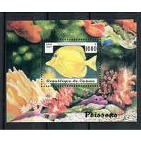 Гвинея - 1997 - Рыбки - [Mi. bl. 510] - 1 блок. MNH.