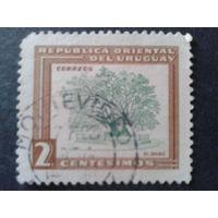 Уругвай 1954 дерево