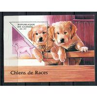 Гвинея - 1997 - Собаки - [Mi. bl. 514] - 1 блок. MNH.