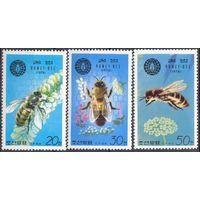 Корея фауна пчёлы насекомые