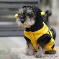 Костюм Пчелки для Вашего любимца - собаки или кошки