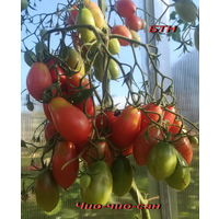 Семена томата Чио-чио-сан