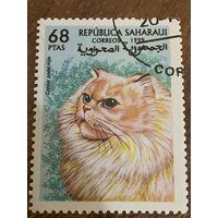 Сахара 1999. Домашние кошки. Colour point rojo. Марка из серии