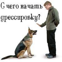 Лакомства для собак - правильный выбор и применение в дрессировке