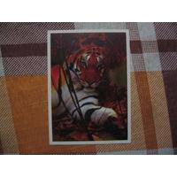 Календарик Тигр 1998 год