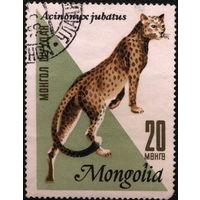 Кошки. Монголия. 1966. Гепард. Марка из серии. Гаш.