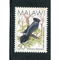 Малави. Хохлатая мухоловка