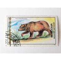 Монголия 1989. Медведи.