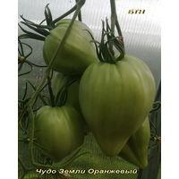 """Семена томата """"Чудо Земли Оранжевый """""""