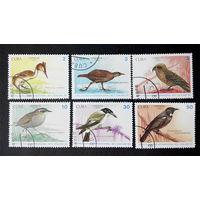 Куба 1990 г. Птицы. Фауна, полная серия из 6 марок #0005-Ф1P1