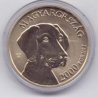 Венгрия, 2000 форинтов 2019 года. Собаки, венгерская выжла.
