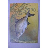 Исаков А., Лещ; 1987, чистая (на обороте описание; рыбы).