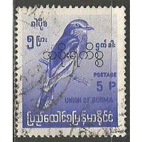 Бирма. Бенгальская сизоворонка. Служебная марка. Надпечатка на #201. 1968г. Mi#98.