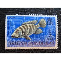 Британский Гондурас. Мозамбикская Тилапия. Фауна. 1969 г.