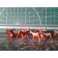 Лошади и жеребцы (Ослы).