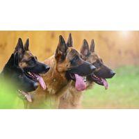 Дрессировка собак - учебный фильм с подробным описанием и практическими рекомендациями