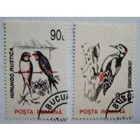 Румыния. Птицы