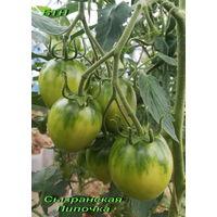 Семена томата Сызранская Пипочка