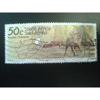 ЮАР 1995 кабаны