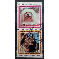 Экваториальная Гвинея породы собак-1978-2 марочки
