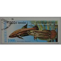 Камбоджа.2000.рыбки
