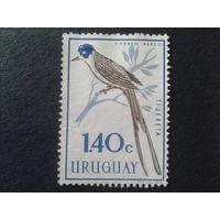 Уругвай 1962 уховертка Mi-2,5 евро