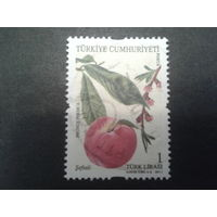 Турция 2011 фрукт